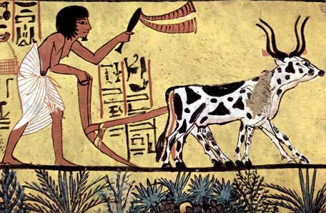 חקלאות במצרים העתיקה