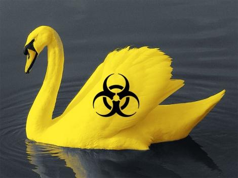 yellow swan biohazard